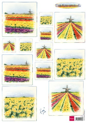 it0582 Marianne D 3D Knipvellen Bulb fields windmills