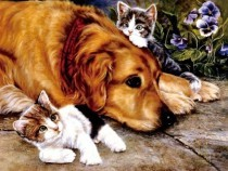 X026 Diamond Painting Set Dog-Kittens 40x30cm