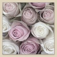 33 x 33 cm Pink Roses